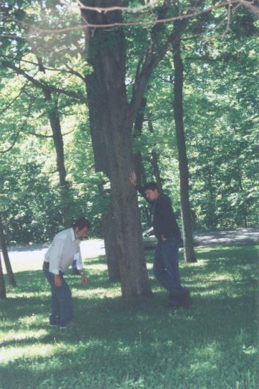 L'Énergie des arbres